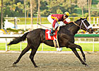 Georgie Boy Gallops in San Vicente