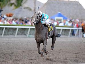 Giant Oak wins the 2011 Donn Handicap.