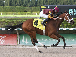 Gibson wins the 2011 Jack Dudley Sprint Handicap.