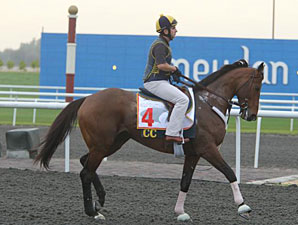 Gio Ponti Energetic in Dubai Appearance