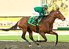 Gio Ponti Can Build On Success in Strub