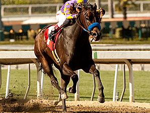 Gladding in the 2011 San Antonio Stakes.