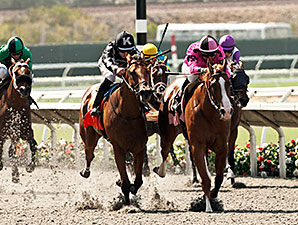 Go West Marie wins the 2014 Fleet Treat Stakes.