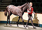 Zoffany Colt Leads Way at Day Four Goffs