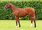 Frankel Filly Tops Goffs Opener at $1.9M