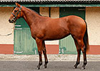 Raven's Pass Filly Tops Goffs Orby Sale
