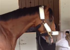 KY Derby: Goldencents Arrives at Churchill