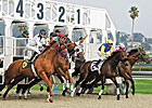 Golden Gate Readies Tapeta Surface for Meet