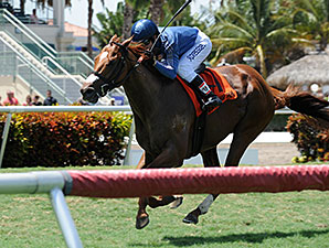 Golden Rifle wins the 2015 Eight Miles East Stakes.