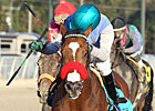 Goldencents&#39; Season Gets Started for O&#39;Neill