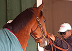 Krigger: Preakness Dreams and Racing History