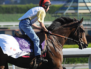 Goldikova at the 2009 Breeders' Cup