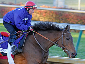 Mixed Emotions for Goldikova's Trainer