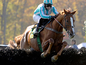Grand National 'Chase: Good Night Again