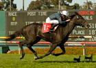 Gozzip Girl Zaps Doubters in American Oaks