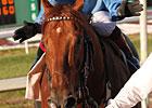 Gran Estreno, 8, Wins Col. Bradley Handicap