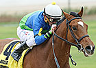 Grand Contender Eyes Another Lone Star Stakes