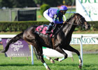 Grand Couturier Back in Form in Bowling Green