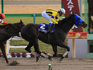 Grape Brandy Swoops to February Stakes Win