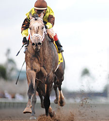 Unbridled's Song Gets 100th Stakes Winner