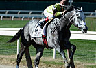 Graydar to Miss Breeders' Cup Dirt Mile