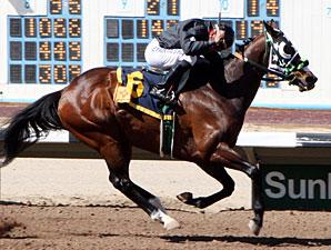 Groushy Apadana wins the Jack Cole Stakes.