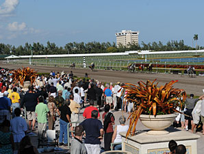 Gulfstream Sets Florida Derby Weekend Records