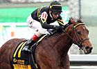 Featured Horse Profile: Gypsy Robin