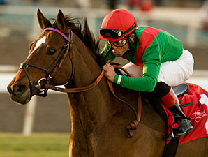 Gypsy's Warning Rallies to Score Matriarch
