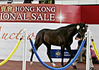Redoute&#39;s Choice Colt Tops HKIS