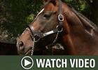 HRTV: Inside Information - 12/24/07
