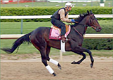 Halfbridled Scratched from Kentucky Oaks