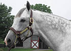 Haskin: Tribute to Unbridled's Song