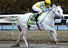 Slideshow: Gotham Stakes 2012