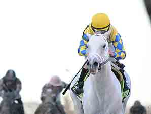 Champion and BC Winner Hansen Retired