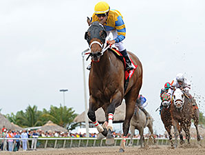 Happy My Way wins the 2014 Sir Shackleton Stakes.