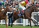 Haradasun - Australian Champion at Ascot