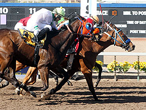 Hard to Resist wins the 2014 Czaria Stakes.