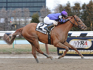 """Hardened Wildcat wins the 2012 Fred """"Cappy"""" Capossela Stakes."""