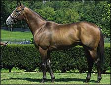 Harlan's Holiday Sires First Stakes Winner