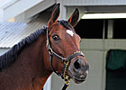 HOY Havre de Grace to be Sold at Fasig-Tipton