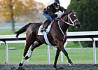 Breeders' Cup Pre-Entries: Star Appeal