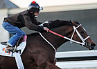 Havre de Grace Drills Bullet at Fair Grounds 
