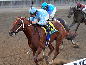 Empire Classic Features Top New York-Breds