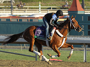Hazardous Primed for Juvenile Sprint