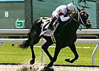 La. Futurity to Decide First-Year Sire Race