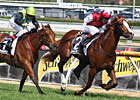 Helmet Heads Aussie Prize Cox Plate 