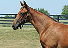 Zenyatta&#39;s Half Sister to Sell in November