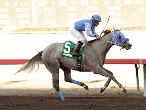 Hi Fashioned wins the 2013 Barretts Juvenile Stakes.