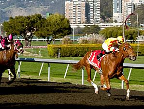 Hidinginplainsight wins the 2013 Camilla Urso Stakes.
